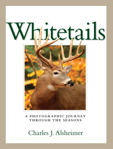 9781440213847: Whitetails: A Photographic Journey Through the Seasons