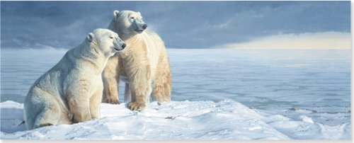 Polar Bears Panoramic Boxed Holiday Cards