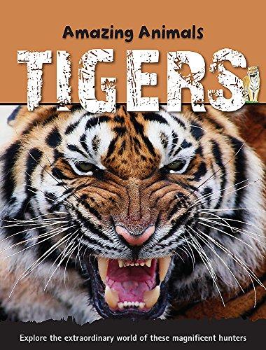 9781445100067: Tigers (Amazing Animals)
