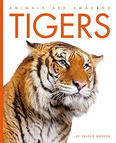 9781445129563: Tigers (Animals are Amazing)