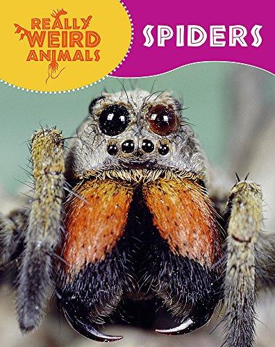 Spiders (Really Weird Animals): Hibbert, Clare
