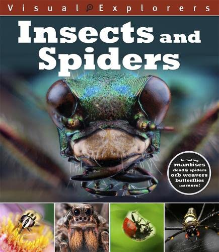 9781445148335: Insects and Spiders (Visual Explorers)