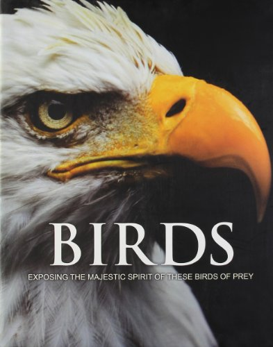Spirit of Birds of Prey