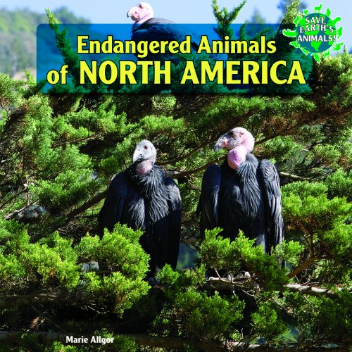 Endangered Animals of North America (Save Earth's Animals!): Marie Allgor