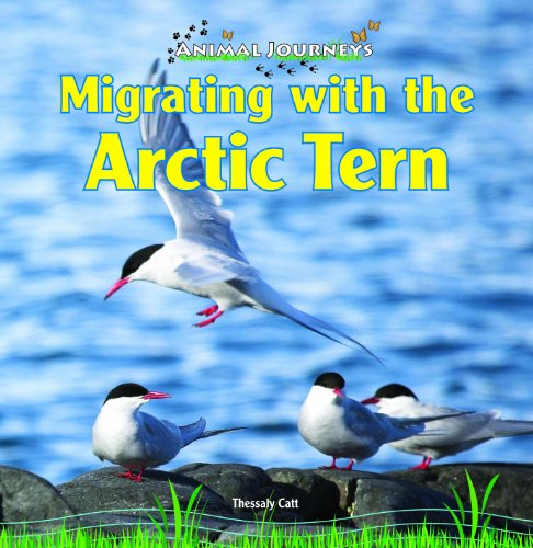 Migrating with the Arctic Tern (Animal Journeys): Catt, Thessaly