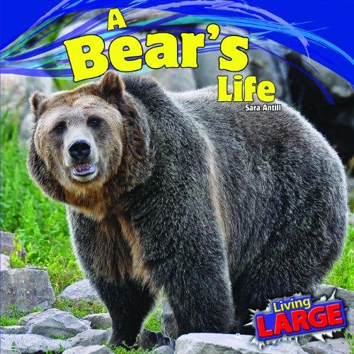 A Bear's Life (Living Large): Antill, Sara