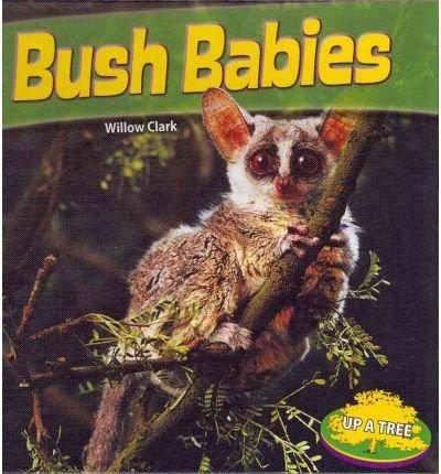 Bush Babies (Up a Tree): Clark, Willow