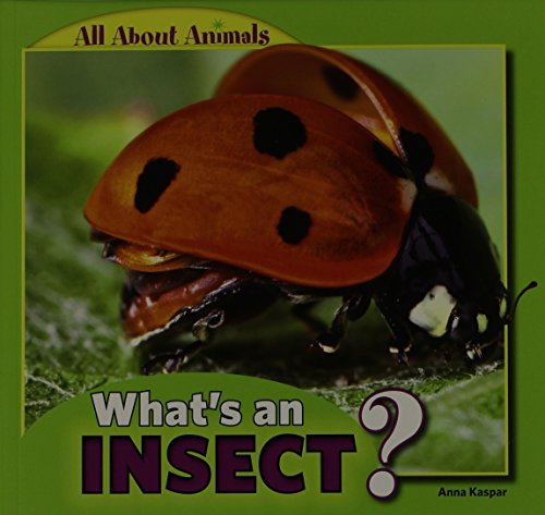9781448862368: What's an Insect? (All about Animals)
