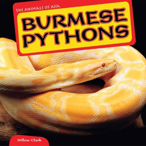 Burmese Pythons (The Animals of Asia)