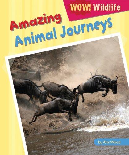 Amazing Animal Journeys (Library Binding): Alix Wood