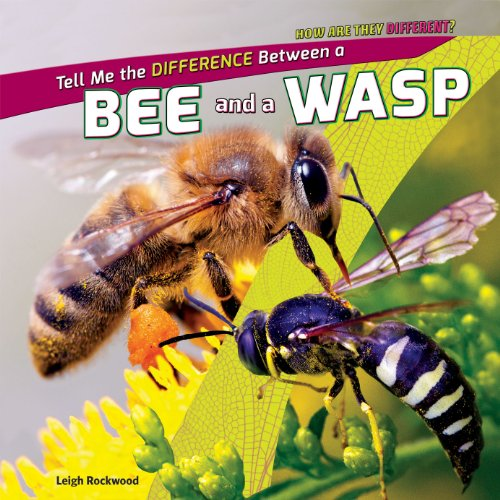 9781448896394: Tell Me the Difference Between a Bee and a Wasp (How Are They Different?)