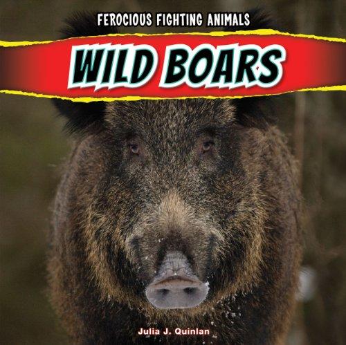 Wild Boars Ferocious Fighting Animals: Julia J. Quinlan