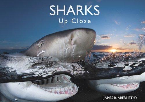 9781450703710: Sharks Up Close