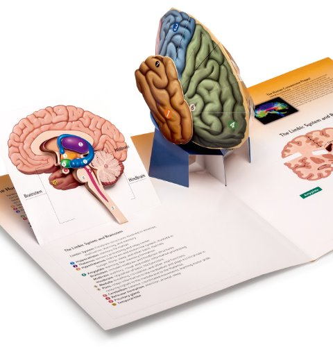 9781464108761: PSYCHOLOGY-THREE-DIMENSIONAL BRAIN