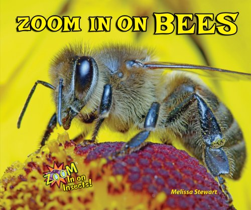 9781464403637: Zoom in on Bees (Zoom in on Insects!)