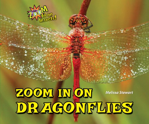 9781464403675: Zoom In On Dragonflies (Zoom In On Insects!)