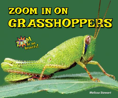 9781464403712: Zoom in on Grasshoppers (Zoom in on Insects!)