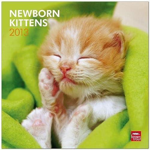 9781465000620: Newborn Kittens 2013 Square 12X12 Wall Calendar (Multilingual Edition)