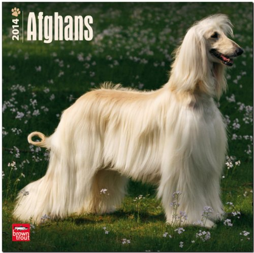 9781465008824: Afghans 2014 18-Month Calendar (Multilingual Edition)