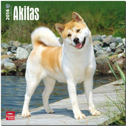 9781465008855: Akitas 2014 18-Month Calendar