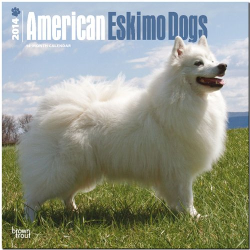 9781465008916: American Eskimo Dogs Calendar (Multilingual Edition)