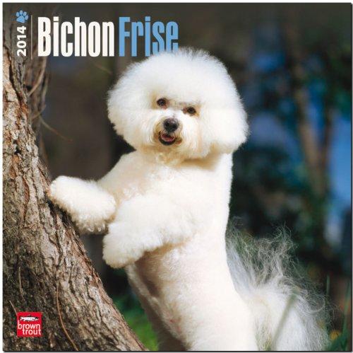 9781465009326: Bichon Frise Calendar