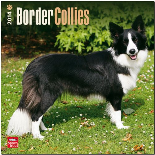 9781465009395: Border Collies 2014 Wall Calendar