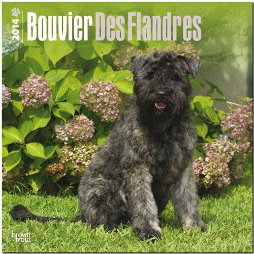 9781465009456: Bouvier Des Flandres Calendar (Multilingual Edition)