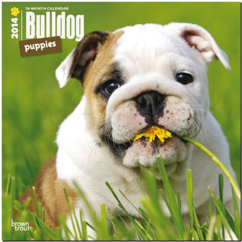 9781465009548: Bulldog Puppies Calendar