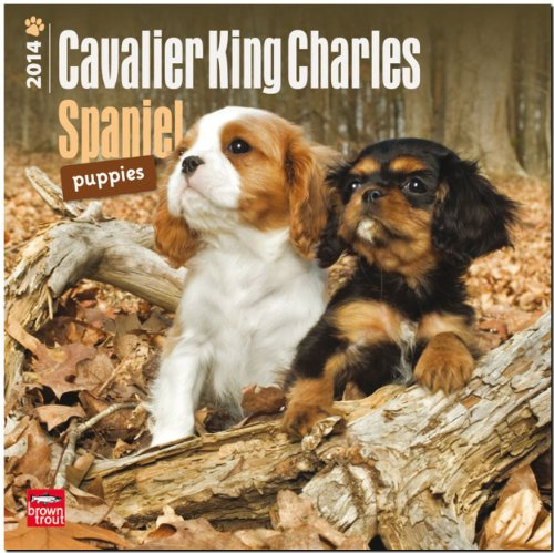 9781465009753: Cavalier King Charles Spaniel Puppies 18-Month 2014 Calendar (Multilingual Edition)