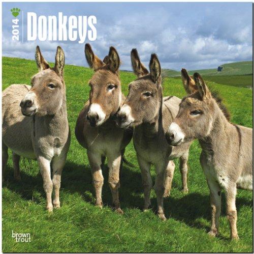 9781465010162: Donkeys Calendar (Multilingual Edition)