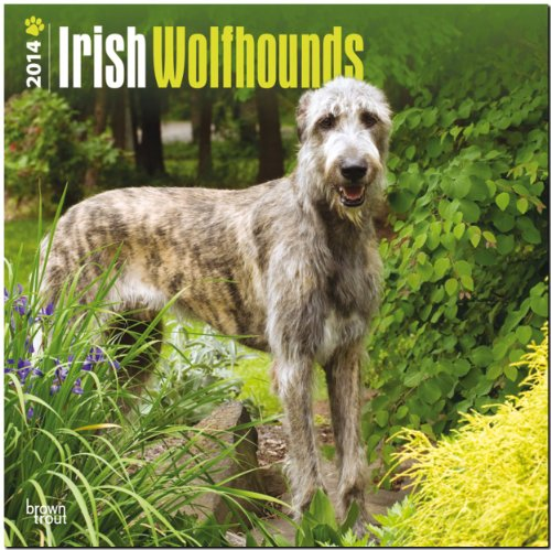 9781465010858: Irish Wolfhounds Calendar