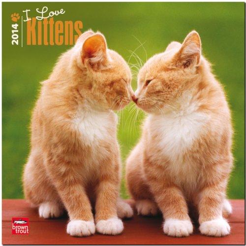9781465011053: I Love Kittens Calendar (Multilingual Edition)