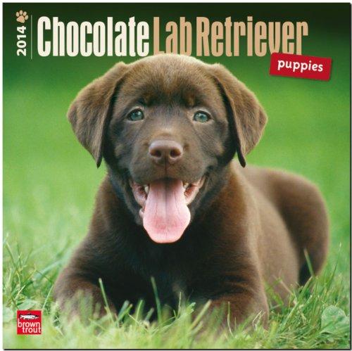 9781465011107: Chocolate Labrador Retriever Puppies 2014 Calendar