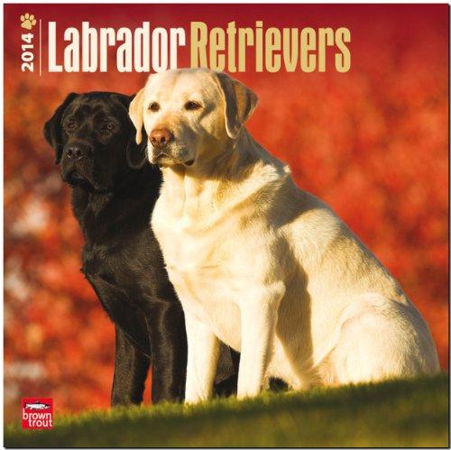 9781465011121: Labrador Retrievers 2014 Calendar