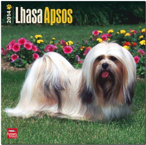9781465011206: Lhasa Apsos Calendar