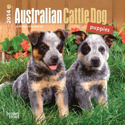 9781465011350: Australian Cattle Dog Puppies 2014 18-Month Calendar