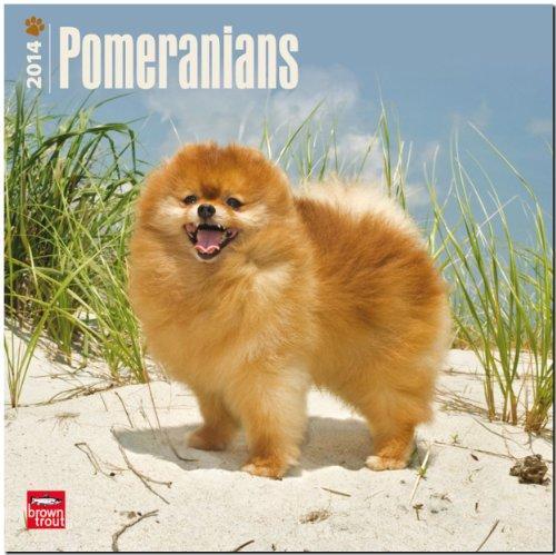 Pomeranians 2014 18-Month Calendar: BrownTrout