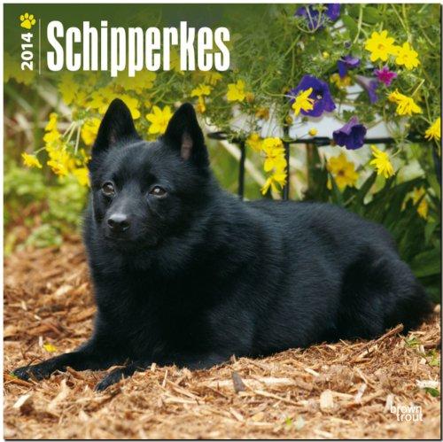 9781465012463: Schipperkes Calendar