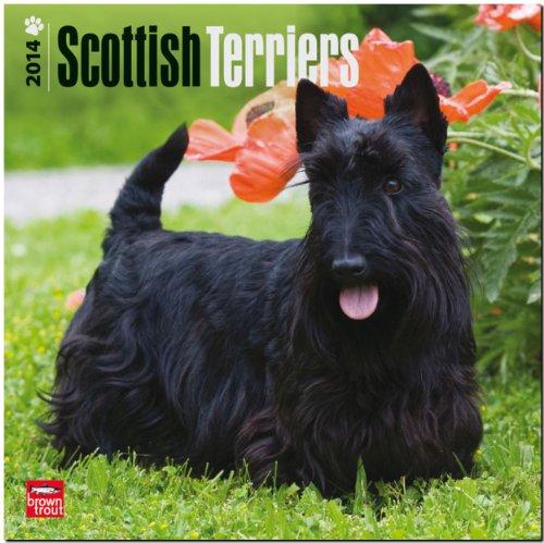 9781465012531: Scottish Terriers 18-Month 2014 Calendar (Multilingual Edition)