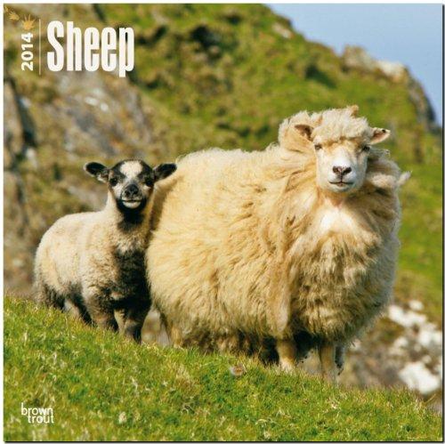 9781465012586: Sheep 2014 Wall Calendar