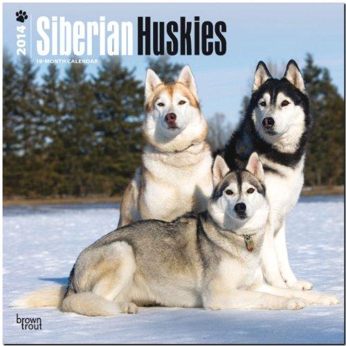 9781465012647: Siberian Huskies 2014 Wall Calendar