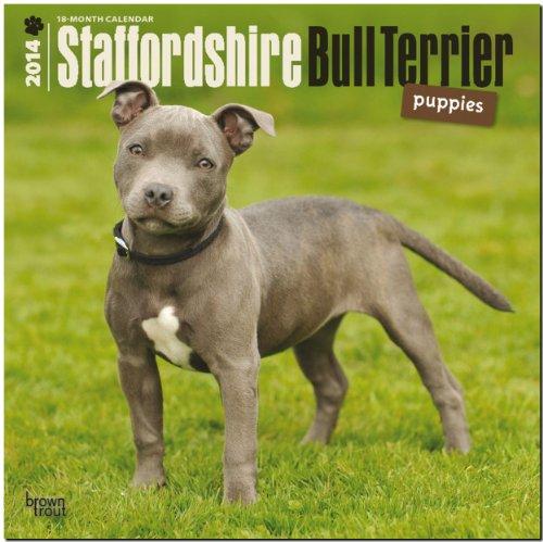 9781465012722: Staffordshire Bull Terrier Puppies Calendar