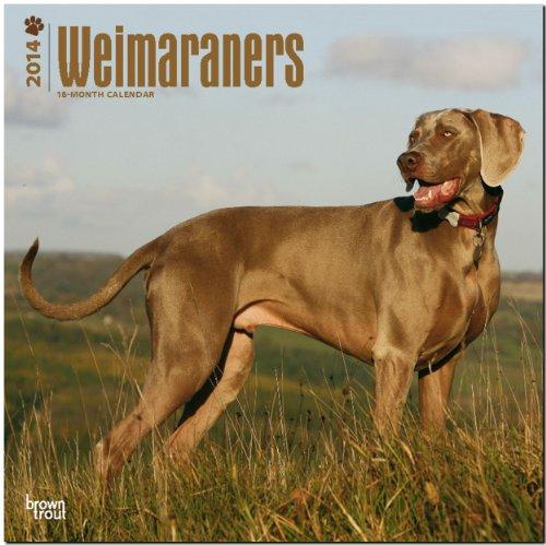 9781465013095: Weimaraners 2014 Calendar