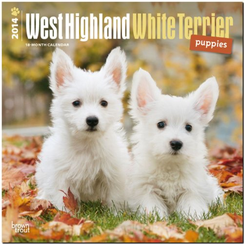 9781465013149: West Highland White Terrier Puppies Calendar