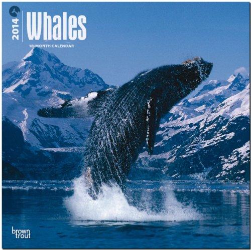 9781465013187: Whales 18-Month Calendar (Multilingual Edition)