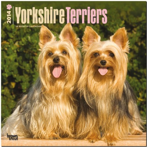 Yorkshire Terriers Calendar (Multilingual Edition)