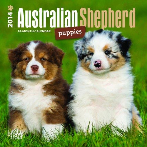9781465013507: Australian Shepherd Puppies 2014 18th-Month Calendar