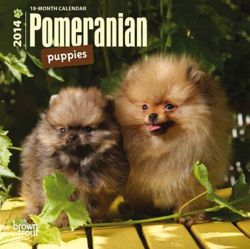 9781465014092: Pomeranian Puppies 2014 Mini Calendar