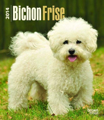 9781465014351: Bichon Frise 2014 Calendar